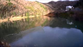 2013年の兵庫県でのカモ猟のかもの回収の様子です。 14年目の猟犬ブリタ...
