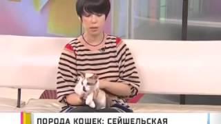 Сейшельская кошка - Все О Породе