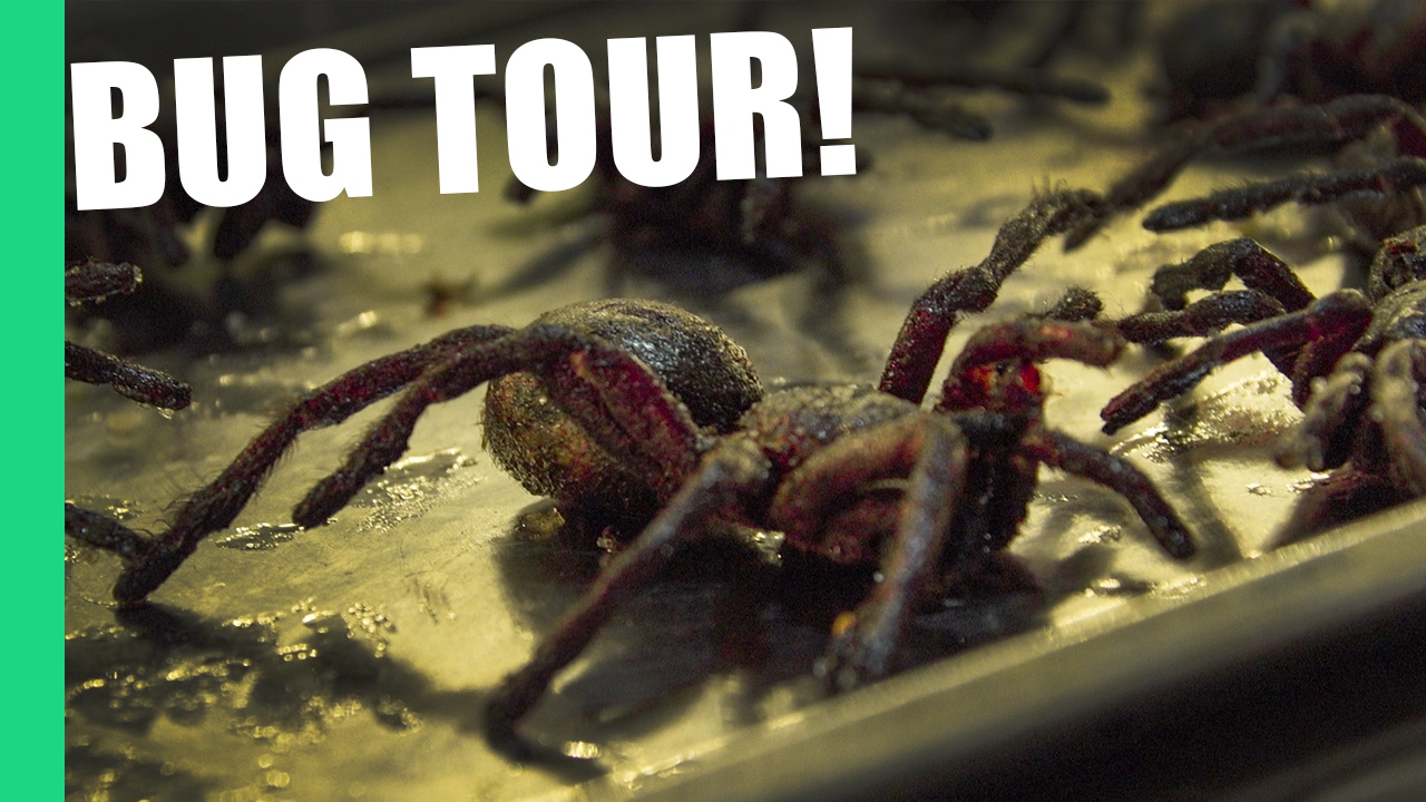 Eating Tarantula in Cambodia on Pub Street (Feat. Bugs Cafe)