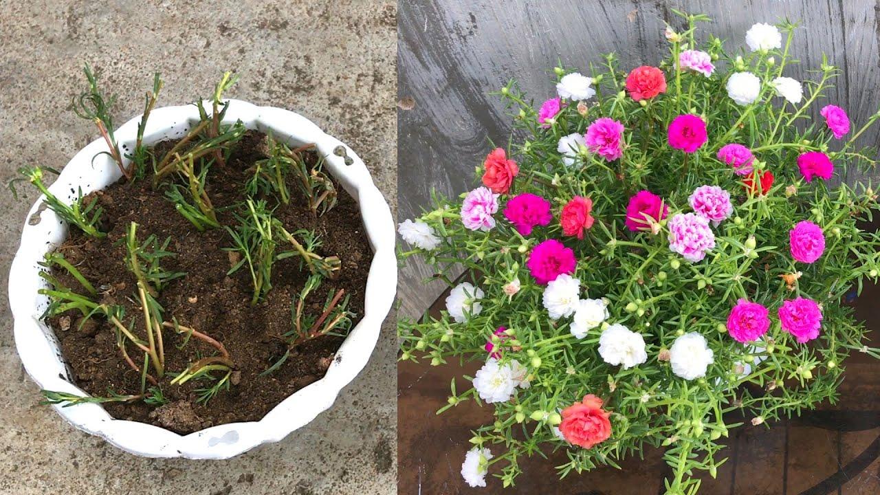 Nhặt cây từ bãi rác về trồng thành chậu hoa tuyệt đẹp
