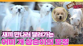 [TV 동물농장 레전드] '어미개 삼순이의 수상한 외출' 풀버전 다시보기 I TV동물농장 (Animal Fa…