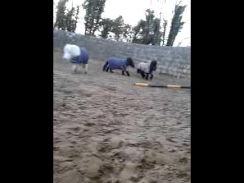 hd horse sex video