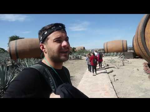 Just Three Amigos- Guadalajara & Tequila Tour