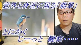野鳥を撮る!カワセミ 撮影の楽しみ方