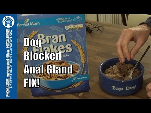 Dog Blocked Anal Gland/anal Sac Problem - How To Fix/solve