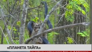 "Планета ""Тайга"". Новости 15/12/2017 GuberniaTV"