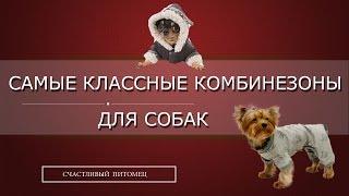 ✌ ➳Самые классные комбинезоны для собак ➳✌