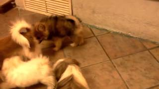 Hermosos cachorritos durante la hora de su recreo en +KOTA.