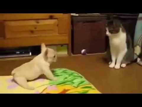 This is so hilarious! A pup trying to get rid of a cat! Adorable battle !