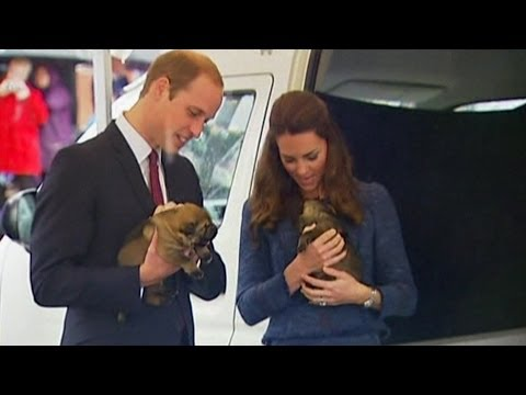 Royal tour: Prince William and Kate captivated by police puppies