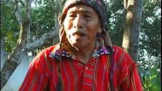 The Mayan New Dawn