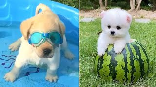 Baby Dogs  Cute and Funny Dog Videos Compilation #2 | Funny Puppy Videos 2021