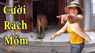 PHD | Dắt Bò Vào Nhà Troll Mẹ | Prank Mom