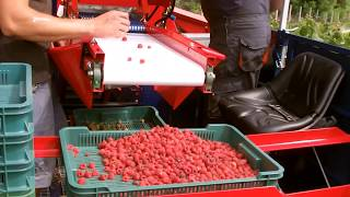 Kombajn do zbioru malin jesiennych - Raspberry Harvester