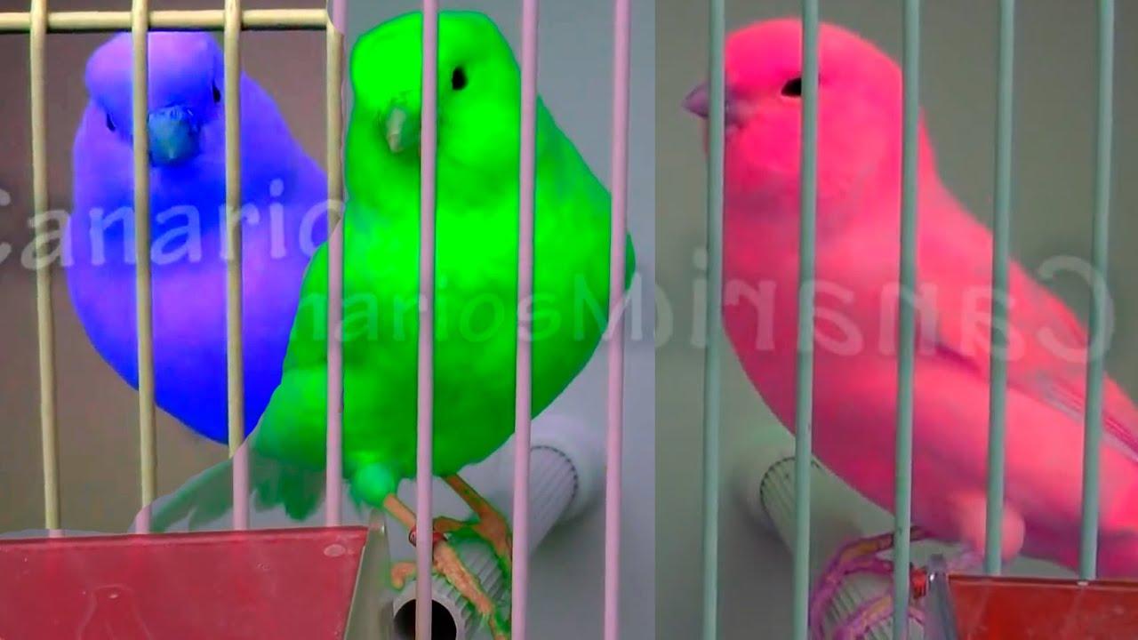 How To Add Color No Estan Pintados Estan Retocados Desde El Ordenador