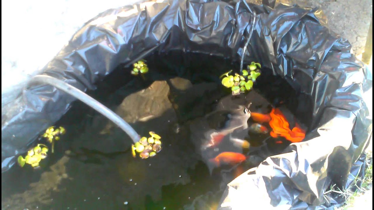 Simple Fancy Goldfish Pond Set Up Youtube