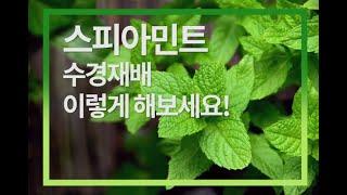 [스마트팜, 수경재배] 누구나 할 수 있는 손쉬운 스피…
