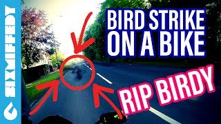 Bird Strike On A Motorbike