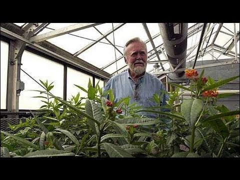 Dr. Chip Taylor - Monarch Butterfly Conservation: The Challenges Ahead