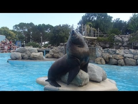 Steller sea lion show @Marineland, Antibes (30.08.2013) -Video1
