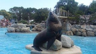 Steller sea lion show @Marineland, Antibes (30.08.2013) -Video1