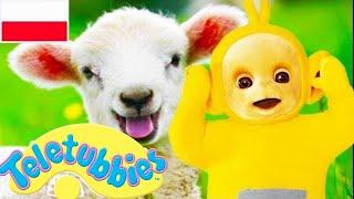 ☆ Teletubisie Po Polsku ☆ Kompilacja 1 godzina ☆ DOBRA JAKOŚĆ (Pełny odcinek) ☆ Pokazy dla dzieci ☆