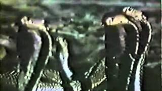 Zuma (Jun Raquiza, Filipinas, 1985) Escena de la Pelicula