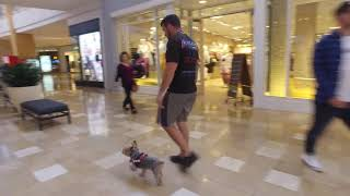 Guinness 6 yo aggressive Yorki Best Arizona Dog Trainers