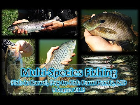 Multi Species Fishing, Fish in Barrel, White Hall, MD, 8 August 2015
