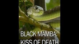 Черная мамба: поцелуй смерти