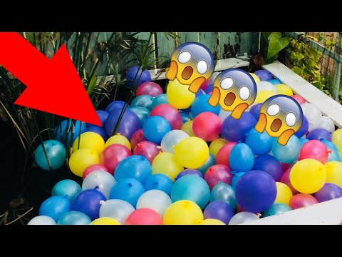 FILLING POND WITH 200 BALLOON!!!!