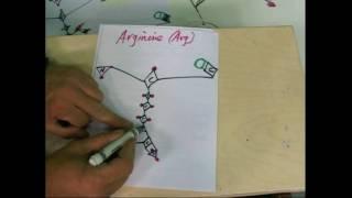 Lysine Arginine Proline 2C-STARmem-2AAs-1JUN2010