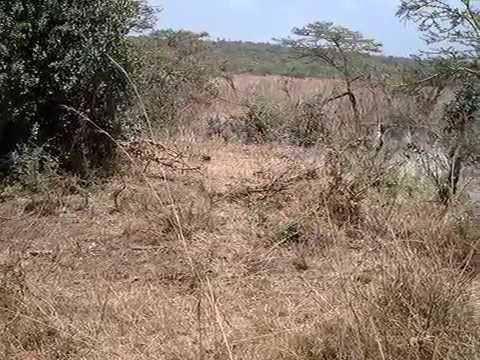 Rayappa Kasi   Nairobi, Kenya, Africa