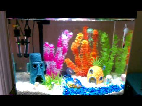 Spongebob 12 gallon aquarium w guppies youtube for Spongebob fish tank