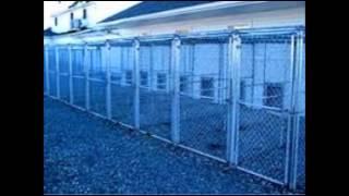 Dog Kennels Boarding