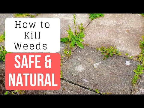 how to kill weeds with vinegar and baking soda