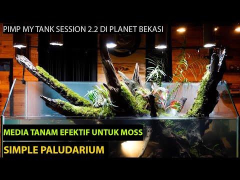 pimp-my-tank-session-2.2-simple-paludarium:-membuat-paludarium-sederhana,-mudah-dan-tanpa-mahal