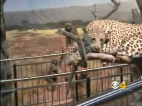 DRS production of The Wildlife Experience (TWE) news on CBS4