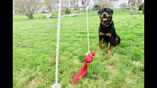 DIY Tetherball dog toy for Rottweiler  |43