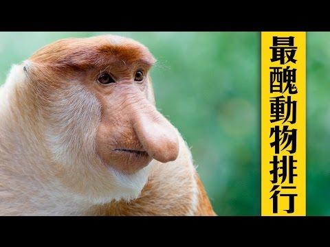 世界10大最丑动物排行榜,大鼻子那个笑尿了