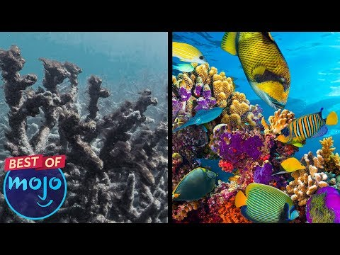 Top 10 Places to See Before They Disappear — Best of WatchMojo