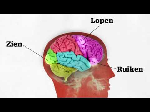vormen van dementie: alzheimer [vumc alzheimercentrum] - youtube