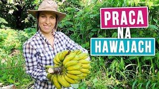 Jak pracuję na Hawajach? Zbieramy egzotyczne owoce! | Agnieszka Grzelak Vlog