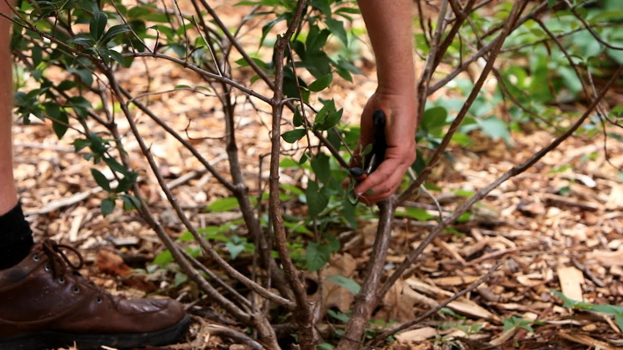How to Prune Plants and Shrubs