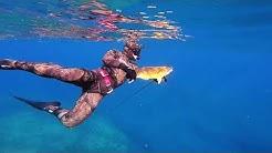 Freediving North Stradbroke Island