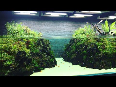 Takashi Amano Nature Aquarium Gallery L Sumida Aquarium (Tokyo, Japan)