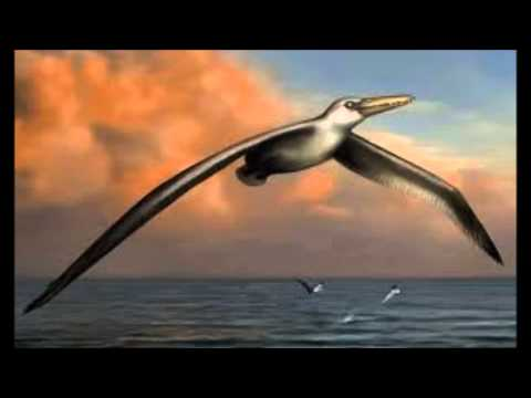 Record-Breaking Giant Bird Dwarfs Albatross : Dwarfs Albatross
