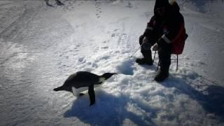 Антарктида. Селфи. Документальный фильм