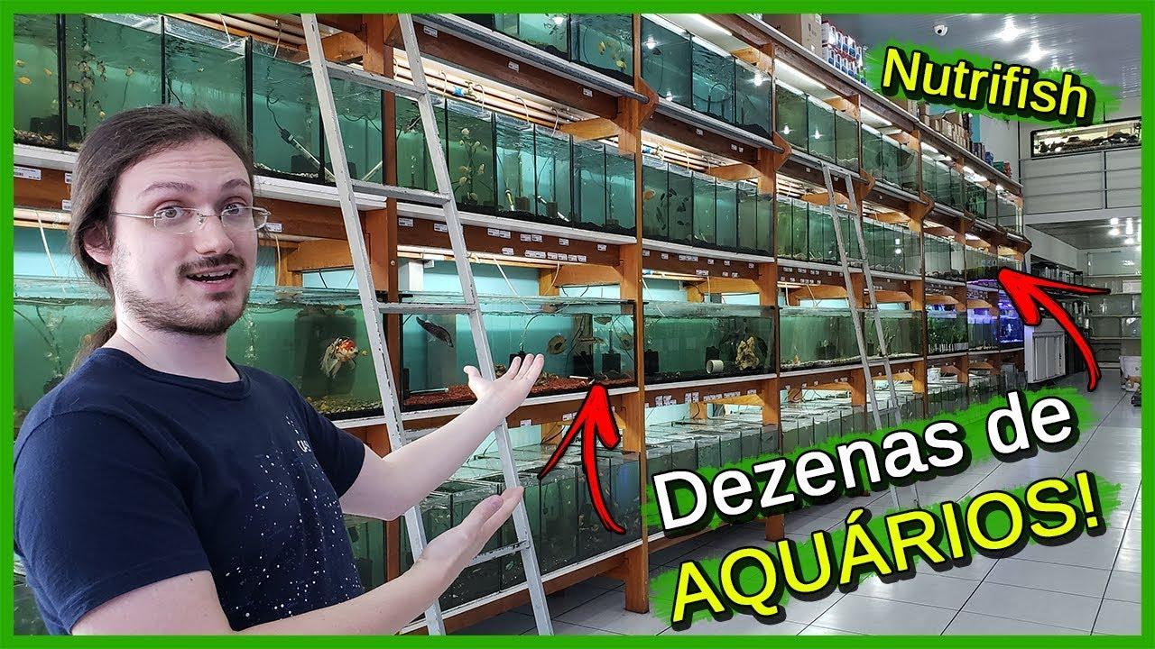 Visitei uma Loja de AQUARISMO! - Nutrifish