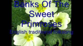 Banks Of The Sweet Primroses, mandolin / bouzouki instrumental